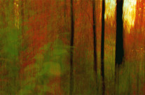 Personal fine art photography, a sunset through my back yard's paw paw patch.