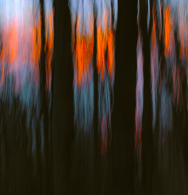 At the edge of a sunset, from deep inside a woods. Another of my photon paintings. Only shape and color matters, here.