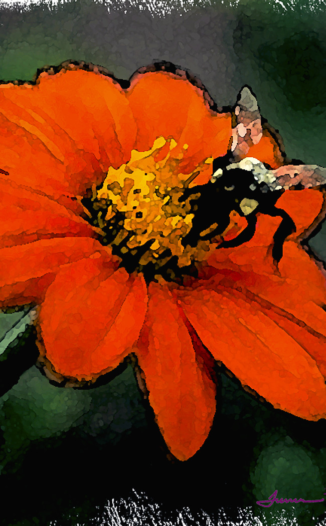 A mexican sunflower, a favorite in our garden over the years.