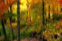 An impressionistic photo of our woods, without the use of computer tricks. The return to capturing scenes by applying old school techniques.
