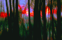 A late evening deep in the woods, the last few minutes at sunset