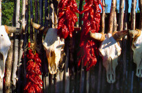 New Mexico, hot peppers and cow skulls, not uncommon to find as decor.