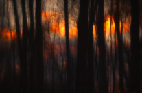 A view from deep within a woods of a fading sunset. This image is a portion from my fine art photography.