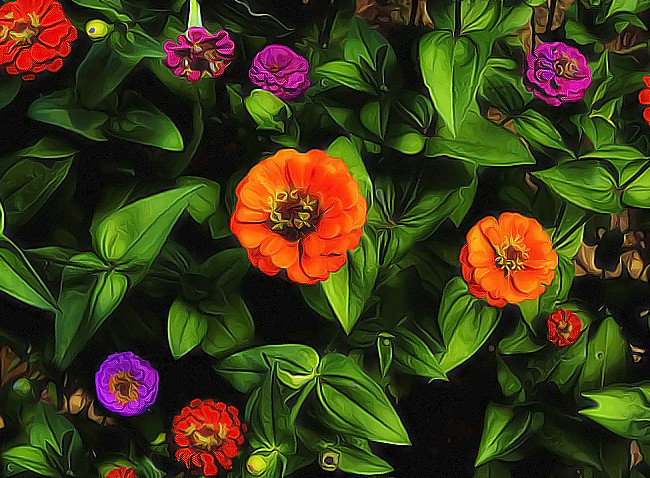 Here at BLT's headquarters the zinnias put on a splendid display of colors this summer.