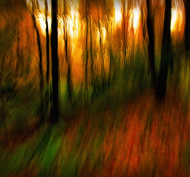 A capture of the chromatic essence of Autumn.
